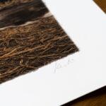 gundogs-pride-limited-edition-print-detail3-kerto-art
