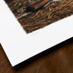 gundogs-pride-limited-edition-print-detail4-kerto-art