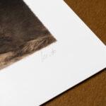 gundogs1-limited-edition-print-detail4-kerto-art
